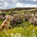 3 Things to Do before You Take Your Dog on a Hike